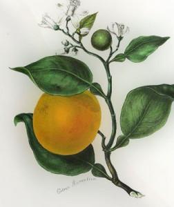 Apelsinmedis