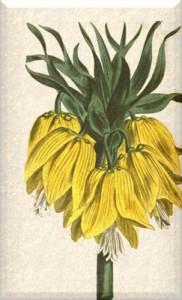 Balandžio 5 dienos gėlė: Geltonžiedė margutė