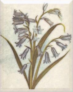 Balandžio 23 dienos gėlė: Varpelis