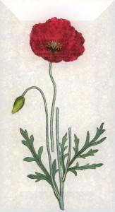 Liepos 20 dienos gėlė: Dirvinė aguona