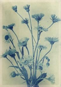 Spalio 14 dienos gėlė: Šiušelė