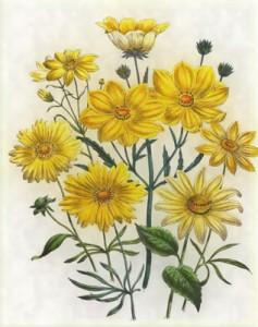 Spalio 19 dienos gėlė: Gludas