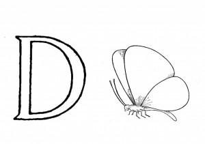 Raidė D- drugelis