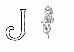 Raidė J- Jūrų arkliukas