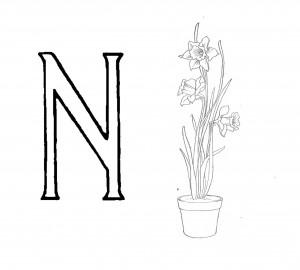 Raidė N- Narcizas