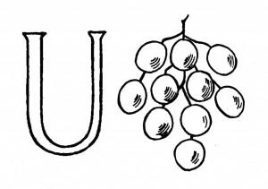 Raidė U- Uogos