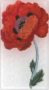Gegužės 24 dienos gėlė: Rytietiškoji aguona