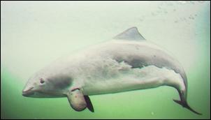 Tarptautine delfino diena