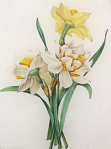 Kovas - Narcizas