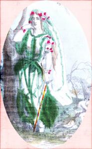 Korta - verbena
