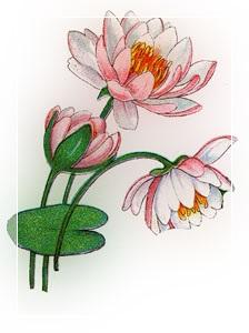 Liepa- Vandens lelija